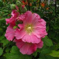 Цветы у дома :: Андрей Лукьянов