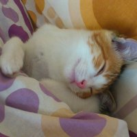 Ушки на подушке :: Елена Миронова