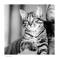 Фотогеничность по-кошачьи :: Анастасия Светлова