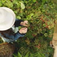 Урожай :: Валерия Копорова