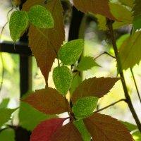 листья :: snd63 Сергей