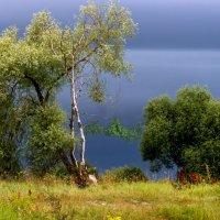 Перед грозой. :: Светлана Крюкова