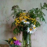 Полевые цветы 2017 год. :: Светлана Калмыкова