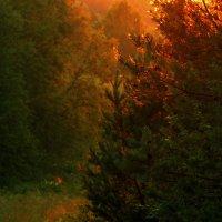 Вечернее... :: Ирина Румянцева