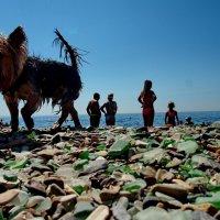 пляжный монстр :: Ingwar