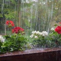 А дождь идёт.... :: Valentina V.