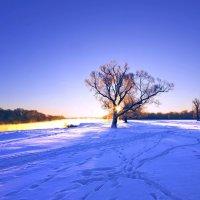 Дерево-Солнце-зима :: Дубовцев Евгений