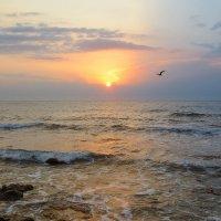 Свет над морем :: Эля Юрасова