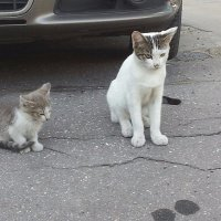 Пять минут из жизни бездомного котёнка... :: Наталья Денисова