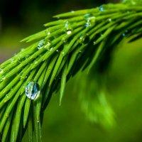 капля дождя :: Irina Novikova