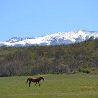 Весна, Крым, свобода :: Тамара Мадюдина