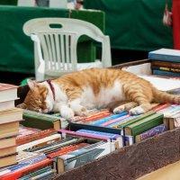 ...кот ученый... :: Savelii Alekseev