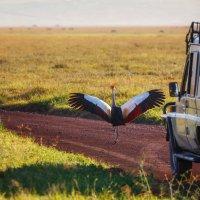 """СТОП""...дальше проезда нет... Танзания! :: Александр Вивчарик"