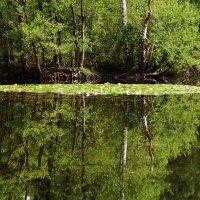 На лесном озере :: Alexander Andronik