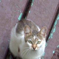 Кошка :: Nikolay Monahov