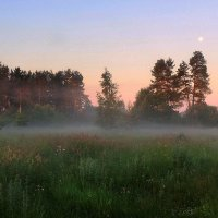Бродит по полю туман.... :: Павлова Татьяна Павлова