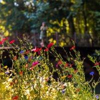 Летние цветы в парке замка Азу-ле-Ридо :: Андрей Крючков
