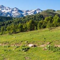 Альпийские луга :: Светлана Васильева