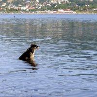 лето... даже собакам хочется в море :: Елена