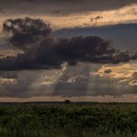 Солнечный дождь :: Андрей Дворников
