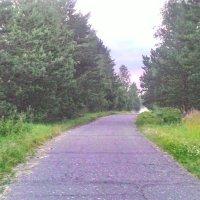 Дорога :: Светлана