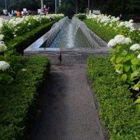 Парк встречает цветами, фонтанами. :: Татьяна Помогалова