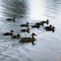 Дождь на озере :: Aнна Зарубина