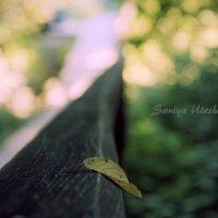 Одиночество :: Saniya Utesheva