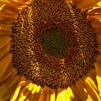 на встречу к солнцу :: Любовь Потравных