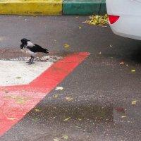 придворный птиц :: Михаил Зобов