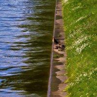 На берегу Лебяжьей канавки... :: Sergey Gordoff