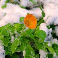 первый снег :: леонид логинов