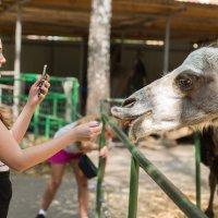 девушка и верблюд :: cfysx