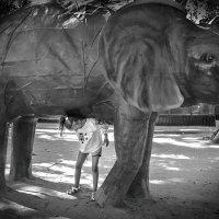 Поднять слона :: Лидия Цапко