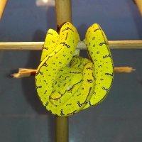 Банановая гроздь :: Екатерина Яковлева