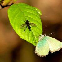соседство: малинница и муха :: Александр Прокудин