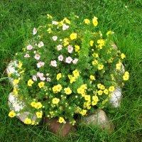 Цветы-цветочки :: Юрий