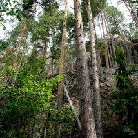 Национальный парк «Реповеси». Вид с деревянной лестницы Катаявуори :: Елена Павлова (Смолова)