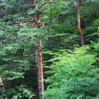лес на горах :: Любовь ***