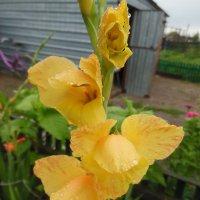 желтизна цветка оживляет :: игорь