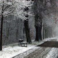 Мне показалось, что была зима... :: Юрий. Шмаков