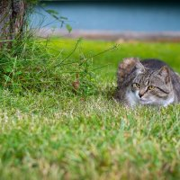 Кот без имени. :: Dmitry D