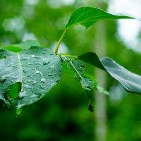Просто дождь :: Сергей Царёв