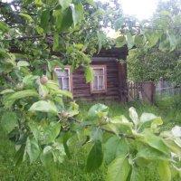 домик с окнами в сад :: Александра Андреева