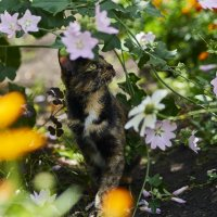 Кошка и цветы. :: Сергей Адигамов