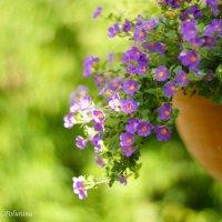 Краски лета :: Екатерррина Полунина
