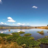 Оазис в саванне...Танзания! :: Александр Вивчарик