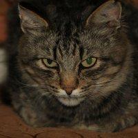 Суровый кот. Жизнь была, не сахар! :: Любовь