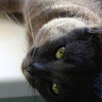 Сегодня, 8 августа -  Всемирный день кошек..!!! :: Валерия  Полещикова