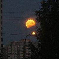 попытка запечатлеть лунное затмение :: Елена